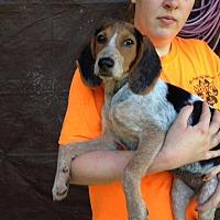 Adopt A Pet :: Belle Spot - Groveland, FL