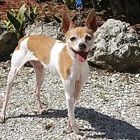 Adopt A Pet :: Gigi - Englewood, FL