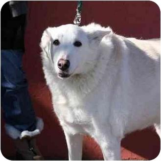 German Shepherd Dog Mix Dog for adoption in Denver, Colorado - Zena