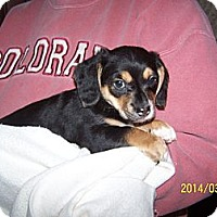 Adopt A Pet :: Willie - Denver, IN