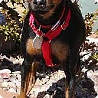 Adopt A Pet :: Peanut - Gilbert, AZ
