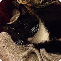 Adopt A Pet :: Butterball - Santa Rosa, CA