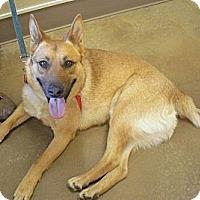 Adopt A Pet :: Dakota - Wickenburg, AZ