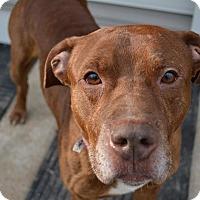 Adopt A Pet :: Tango - Reisterstown, MD