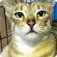 Adopt A Pet :: Chloe - Medway, MA