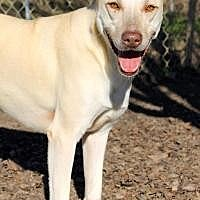 Shepherd (Unknown Type) Dog for adoption in Memphis, Tennessee - Greta