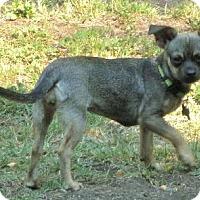 Adopt A Pet :: Bambi - Half Moon Bay, CA