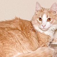 Adopt A Pet :: Rusty - Cashiers, NC