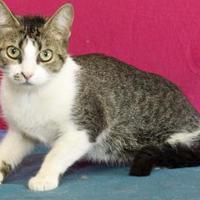 Adopt A Pet :: Karla - Bristol, IN