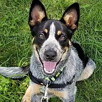 Adopt A Pet :: Walker - Garden City, NY