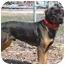 Photo 2 - Rottweiler Mix Dog for adoption in Austin, Minnesota - Cortez