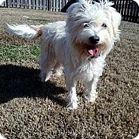 Adopt A Pet :: Aubrie - Baton Rouge, LA