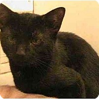 Adopt A Pet :: Blackie - Forest Hills, NY