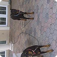 Adopt A Pet :: Lightening - miami beach, FL
