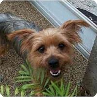 Adopt A Pet :: Jackie-O - Ocala, FL
