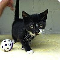 Adopt A Pet :: Tootsie - Island Park, NY