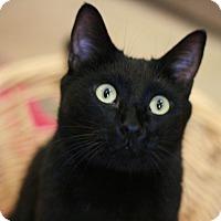 Adopt A Pet :: Chief - Canoga Park, CA