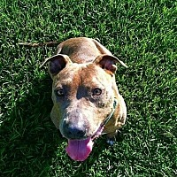 American Pit Bull Terrier Mix Dog for adoption in Mobile, Alabama - Peaches