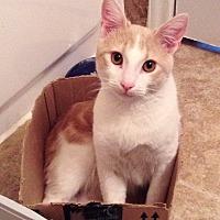 Adopt A Pet :: Madmartigan - Houston, TX