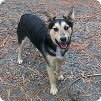 Adopt A Pet :: Rusty - Chewelah, WA