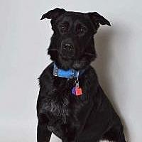 Adopt A Pet :: Yaco - Salt Lake City, UT