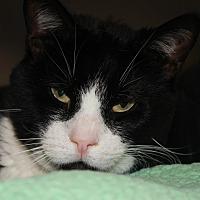 Adopt A Pet :: CANON - Clayton, NJ