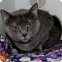 Adopt A Pet :: Kitty - New Kensington, PA