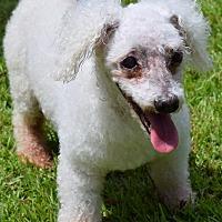 Adopt A Pet :: Nala - Mount Pleasant, SC