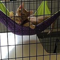 Adopt A Pet :: Squash, Cantaloupe, and Cider - Rincon, GA