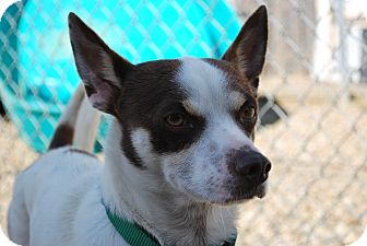 Terrier (Unknown Type, Small) Mix Dog for adoption in Berea, Ohio - Dumpy
