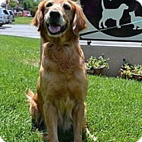 Adopt A Pet :: Jolene - Danbury, CT