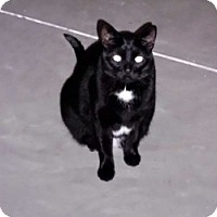 Adopt A Pet :: Sampson - Milwaukee, WI