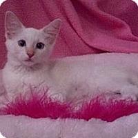 Adopt A Pet :: Zaphyre - Phoenix, AZ