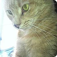 Adopt A Pet :: Ellie - Warminster, PA
