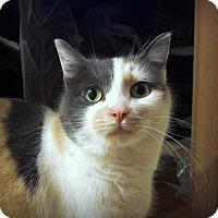Adopt A Pet :: Midge (@ Woodbury Petsmart) - Roseville, MN