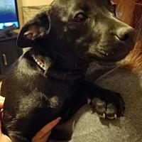 Adopt A Pet :: Aria - El Paso, TX