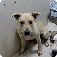 Adopt A Pet :: A07 Brett - Odessa, TX