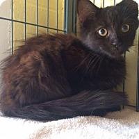 Adopt A Pet :: Saturn (TAS #10f 9/13) - Trenton, NJ