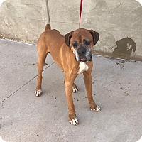Adopt A Pet :: Lafayette - Austin, TX