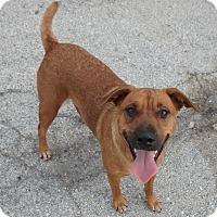 Adopt A Pet :: Flossie - Seguin, TX