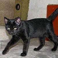 Adopt A Pet :: Tony - Ruidoso, NM