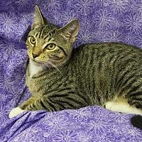 Adopt A Pet :: Frog - Addison, IL