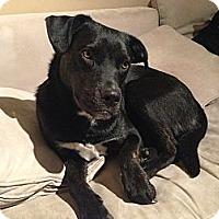 Adopt A Pet :: Gloria - Alexandria, VA