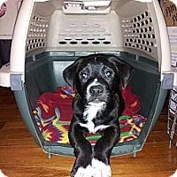 Adopt A Pet :: Winifred - New Boston, NH