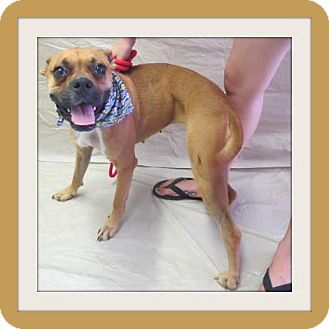 Boxer Mix Dog for adoption in Woodlyn, Pennsylvania - Lennon