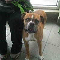 Adopt A Pet :: Shiner 1 - Austin, TX
