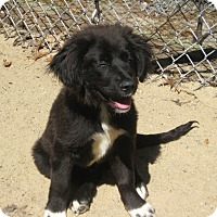 Adopt A Pet :: GIDEON - ADOPTION PENDING - Sudbury, MA
