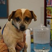 Adopt A Pet :: Oliver - Evans, GA