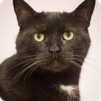 Adopt A Pet :: Tot - Circleville, OH