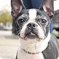 Adopt A Pet :: Macy - Marietta, GA